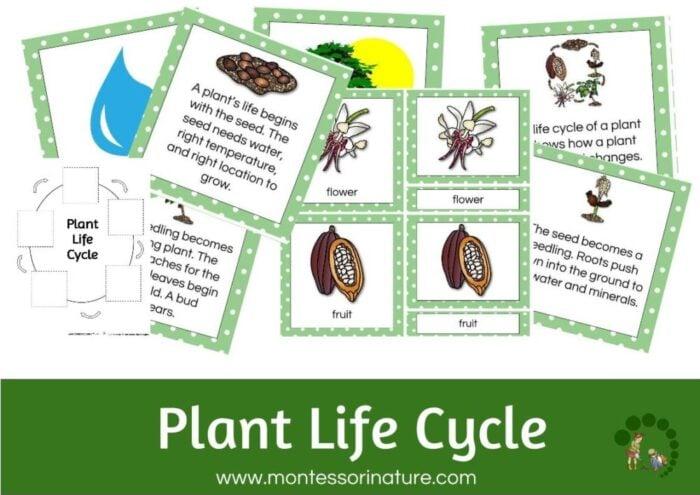 Plant Life Cycle - Montessori Nature