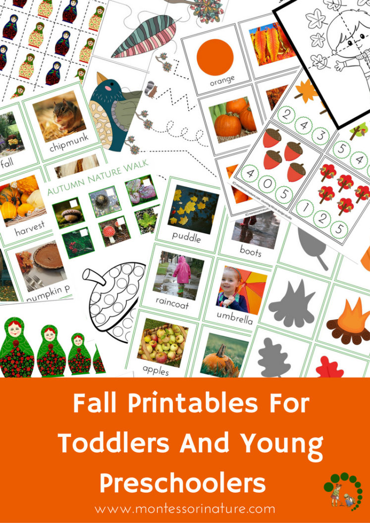 photograph regarding Fall Printable Activities named Drop Printables for Infants and More youthful Preschoolers