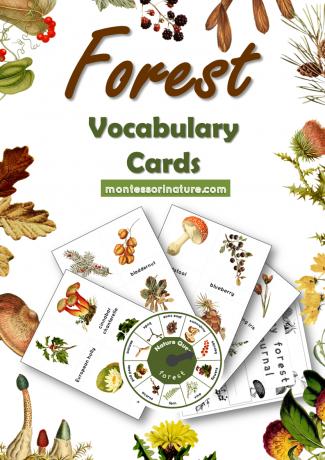 Forest Vocabulary Cards Montessori Nature