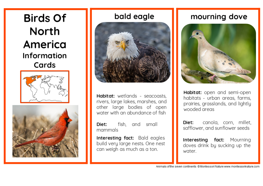 45 animals of north america nomenclature and information for Good facts about america