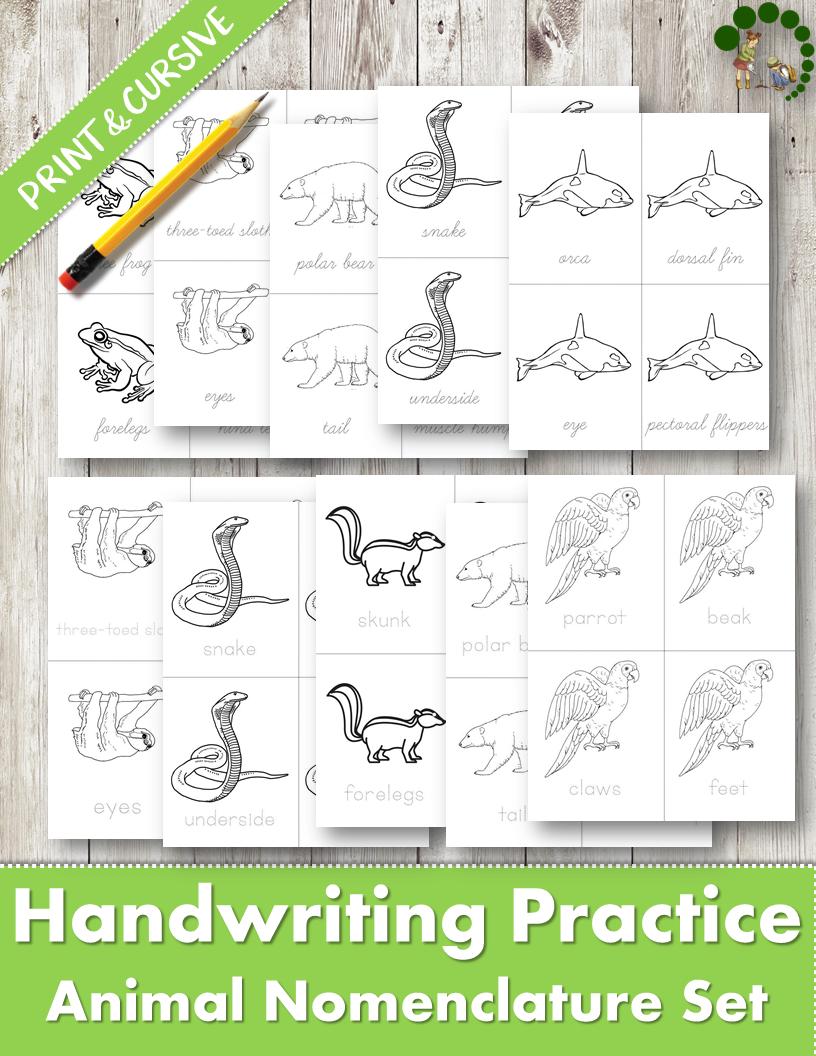 handwriting practice for children montessori classroom parts of animals nomenclature set. Black Bedroom Furniture Sets. Home Design Ideas