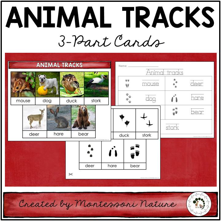 graphic relating to Printable Animal Tracks named Animal Tunes Character Curriculum within just Playing cards