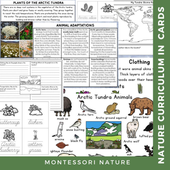 The Tundra Biome | Nature Curriculum in Cards