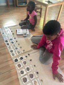 Montessori Nature Printables (2)