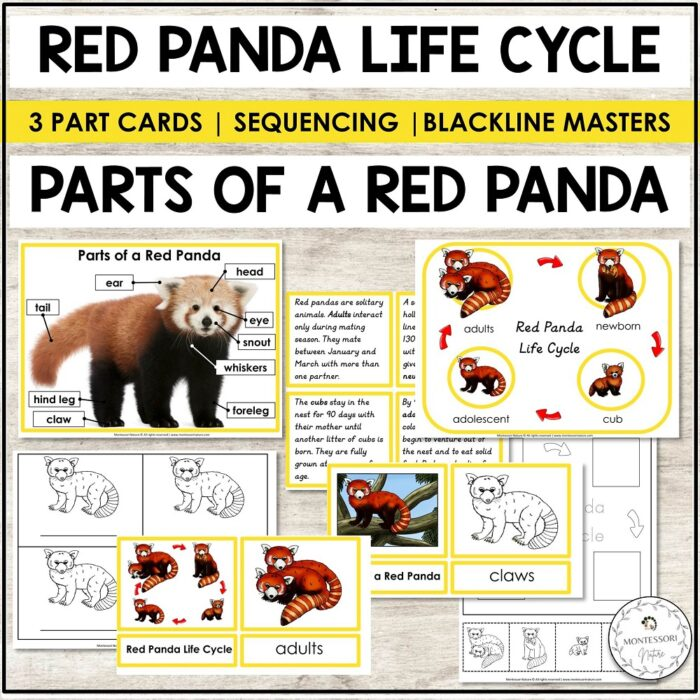 Red Panda Life Cycle Parts of a Red Panda 3 Part Cards Posters