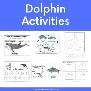 Montessori Nature Free Printables Learning Activities for Children (93)