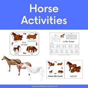 Montessori Nature Free Printables Learning Activities for Children (94)